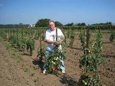Tying Tomato Plants